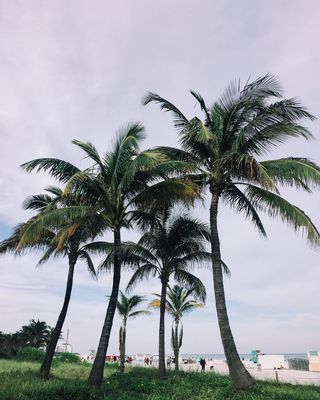 Florida & Palm Trees